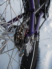 bike_pugs_freewheel