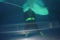 Diver in the Penguin House