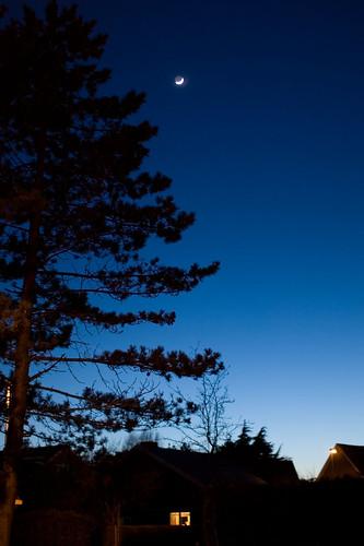 De maan boven de Beukenlaan