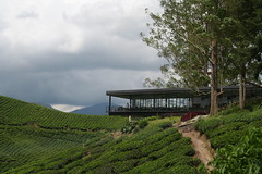 Boh Teh Plantation Tea Room