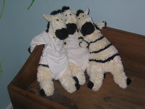 Zebras Just Chillin