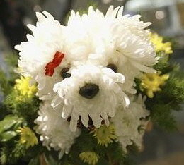 cute flower dog