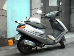 cat bus :p