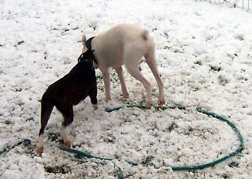 snowdogs0010