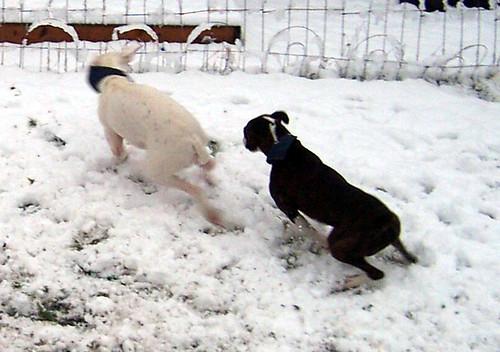 snowdogs0012
