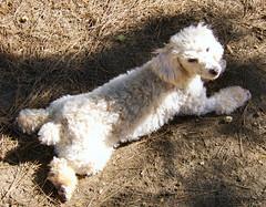 Sprawled in the Dirt