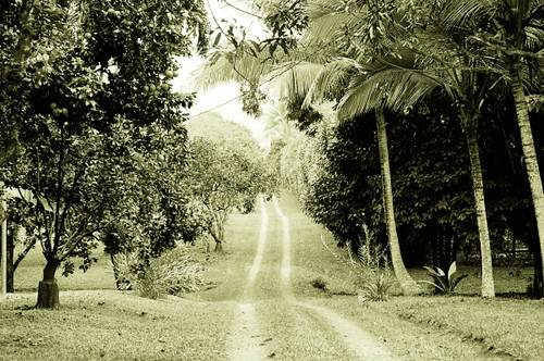 the farm road in Costa Rica