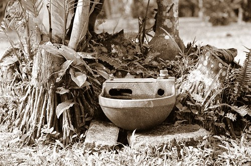 dog's water bowl in Costa Rica