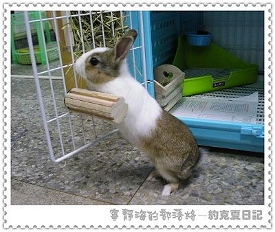 約克夏日記_20060103_有錢能使兔推磨