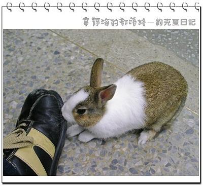 約克夏日記_20060103_死命咬鞋