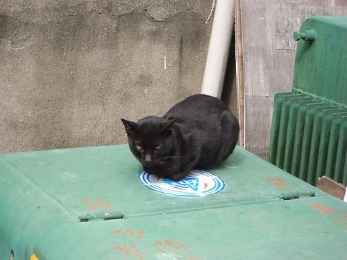 Market Cat 1