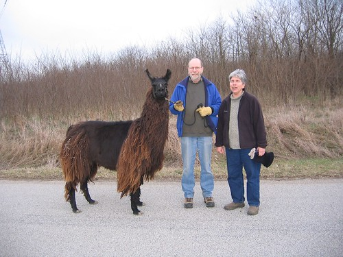 Walking the Llama