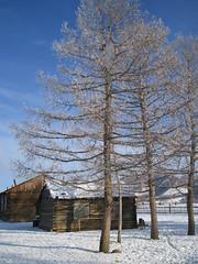 Tree and log