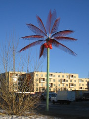 Palm tree in northern city