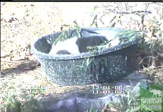 cub-in-a-tub