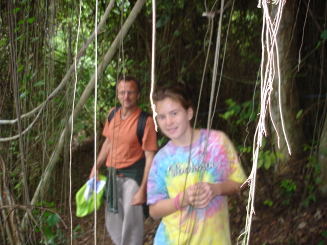 Rain forest vines