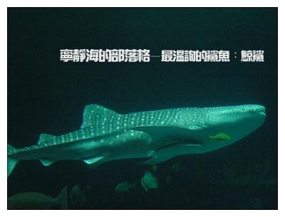 夏季感冬之旅_0117_海生館的鯨鯊