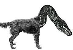 dogsnake