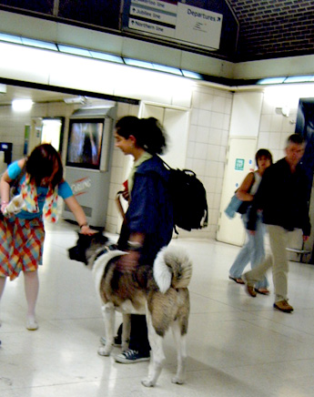 Dog at Waterloo London Underground Station
