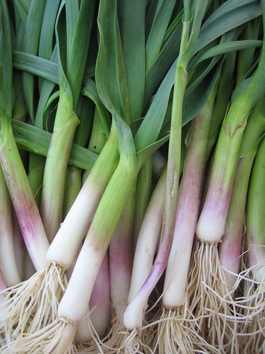 Green (spring) garlic