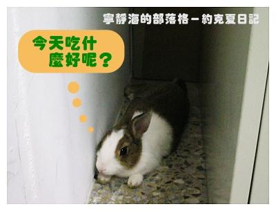 約克夏日記_20060211_今天吃什麼好?