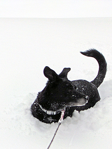smalldogbigsnow