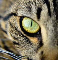 The Eye of The Tiger  ......  Explore #416  1-4-2014 photo by Mrs Sarah Pierce Photography