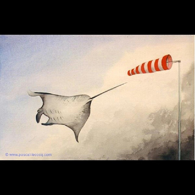 COURANT D'AILES - Wings current- by Pascal Lecocq,