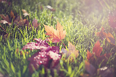 Autumn bokeh photo by Sunshine-D