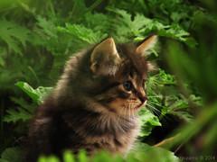 Un pequeño gato - A little cat photo by Danferpizarro