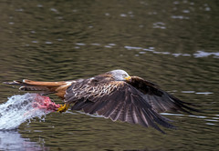 Kite and Food photo by Howie Mudge LRPS