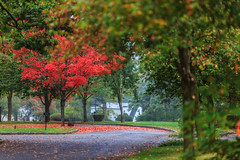 Fall Foliage at Ferncliff Cemetery photo by Samantha Decker