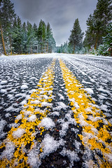 Snow-Covered Road in Yellowstone National Park photo by dfikar