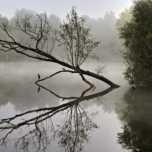 fog in the morning (V)