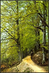 Walking in a Danish beech woods, Spring,1971 photo by cayugahull08
