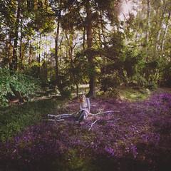 heathland. photo by steffi au