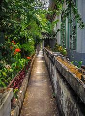 Pathway through the cemetery photo by FotoGrazio