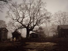 quiet yard photo by History Rambler