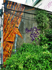 I Can't See the Wood For the Graffiti photo by Steve Taylor (Photography)