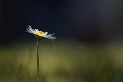 Simplicity photo by jonahhhh
