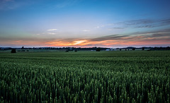 Fields of sunset photo by Existens