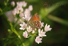 Explore                                                                                                           Austin Texas Spring: wonderful butterfly photo by Jen's Photography