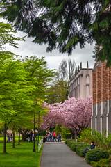 Spring, UW photo by rowjimmy76