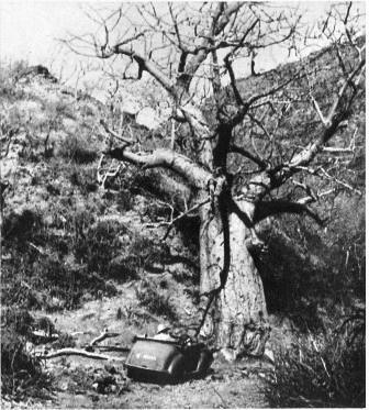 1941- Erythrée-