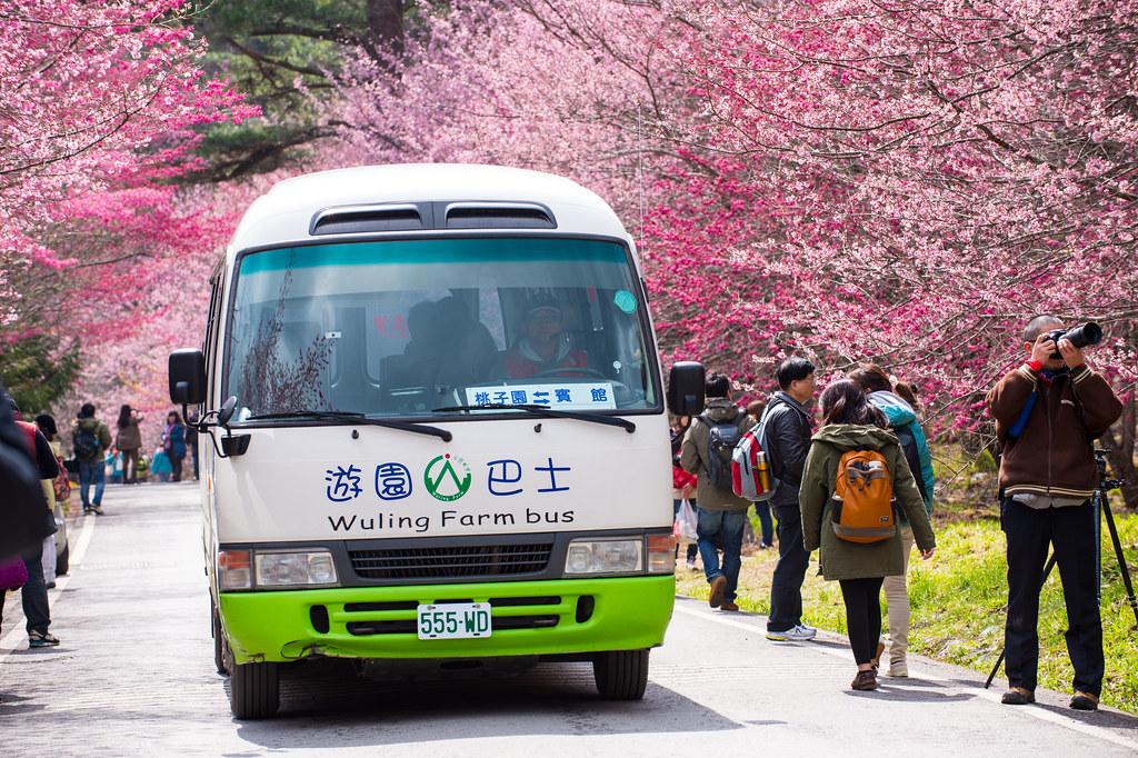 武陵农场赏樱 DSC_6102