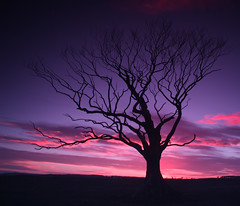 Northumberland Tree at Sunset. [Explored] photo by wazimu0