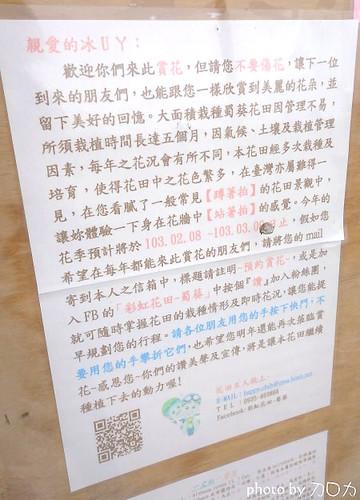 33_台南學甲蜀葵花海
