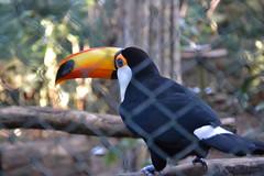 Réserve naturelle (Iguazu)