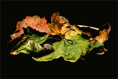 Autumn's still life photo by Guigui-Lille