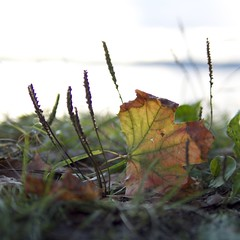 Autumn is coming photo by jon700